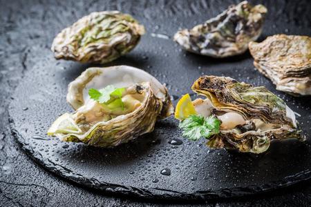 Recém-capturado ostras no escudo na rocha preta