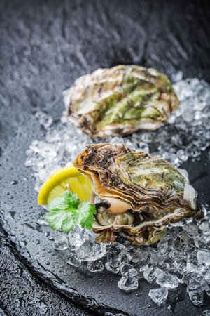 Tasty oysters on crushed ice ready to eat Stok Fotoğraf