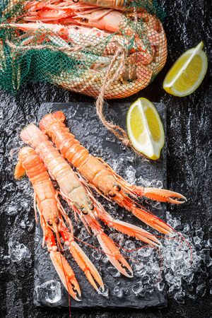 ice crushed: Verse langoustines op crushed ijs