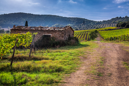 agriturismo: Vineyards and country road in Tuscany, Italy