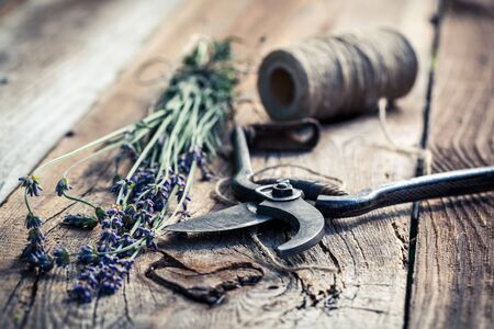 pruning scissors: Aromatic lavender on old wooden table