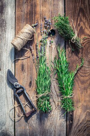 pruning scissors: Freshly harvested herbs before drying