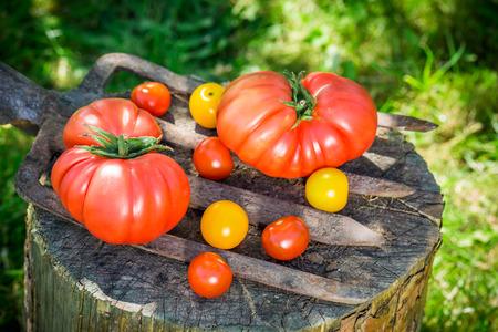 熟した: 完熟トマト