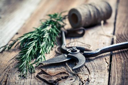 pruning scissors: Aromatic rosemary before drying