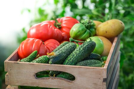 fresh produce: Fresh tomatoes and cucumbers in wooden box