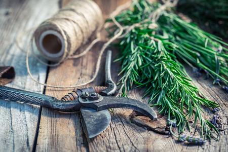 pruning scissors: Fresh herbs before drying Stock Photo