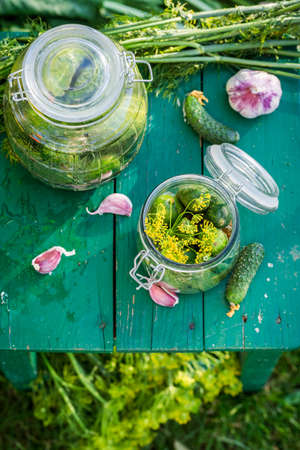 gherkins: Preparation for gherkins in the countryside