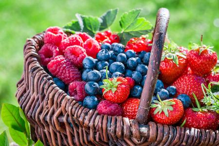 화창한 날에 건강한 베리 과일