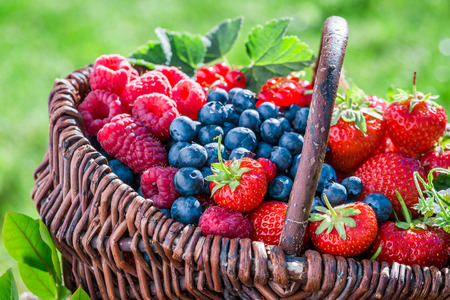 Healthy berry fruits in sunny day Stok Fotoğraf
