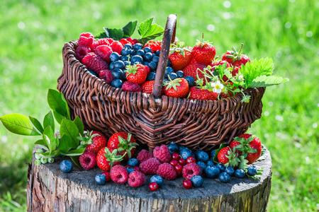 庭で新鮮なベリー フルーツ 写真素材