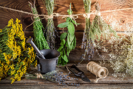 tincture: Aromatic herbs for tincture as alternative medicine Stock Photo
