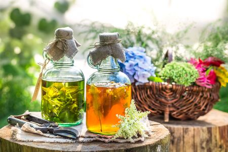 witchdoctor: Healing tincture in bottles with alcohol and herbs Stock Photo