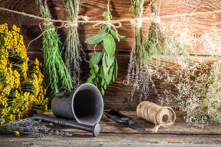 tincture: Therapeutic herbs for tincture as alternative medicine Stock Photo