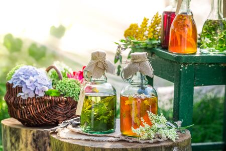 witchdoctor: Healing herbs in bottles with herbs and alcohol Stock Photo