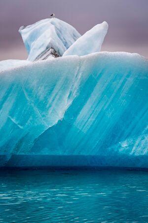 iceberg: Seagulls sitting on top of iceberg in Iceland