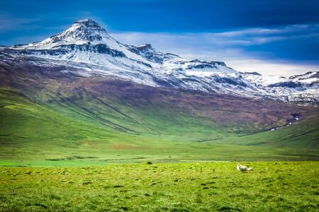green land: Few sheeps in the mountains in Iceland