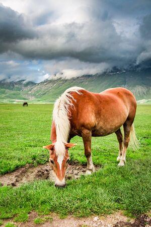 umbria: Horses in valley near Castelluccio, Umbria, Italy Stock Photo