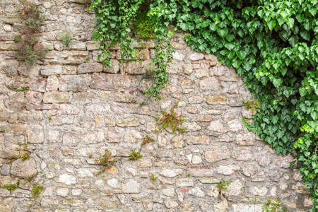 Old stone wall with ivy as background Stock Photo