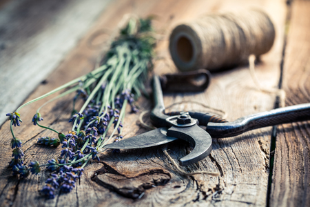 pruning scissors: Fresh lavender on old wooden table