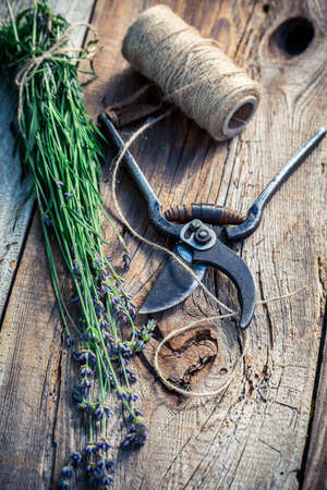 pruning scissors: Freshly harvested lavender on old wooden table