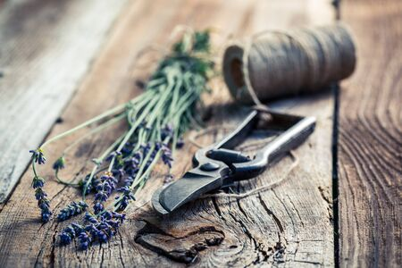 pruning scissors: Lavender on old wooden table