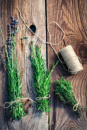 pruning scissors: Healthy herbs before drying Stock Photo