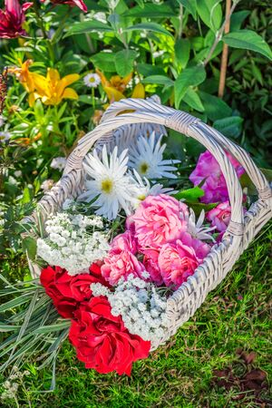 pruning scissors: Beautiful flowers in basket