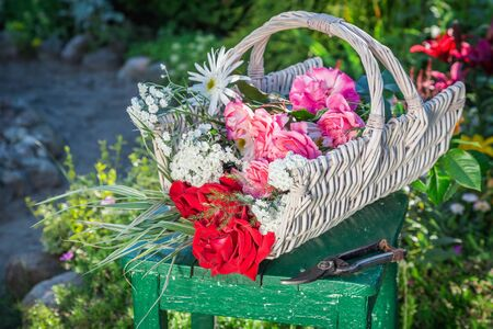 pruning scissors: Beautiful flowers in basket in summer garden Stock Photo