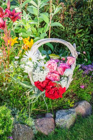 pruning scissors: Freshly cut colorful flowers in summer garden