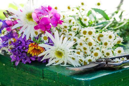 pruning scissors: Freshly cut flowers in garden Stock Photo