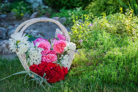 pruning scissors: Freshly cut flowers in basket in summer garden Stock Photo