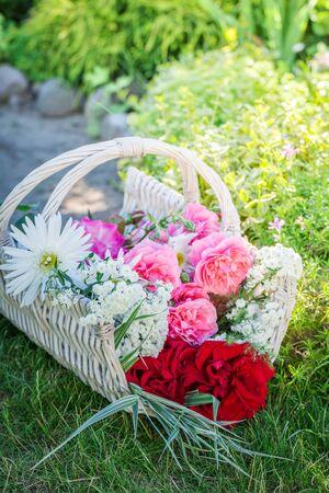 pruning scissors: Freshly cut flowers in basket in garden Stock Photo
