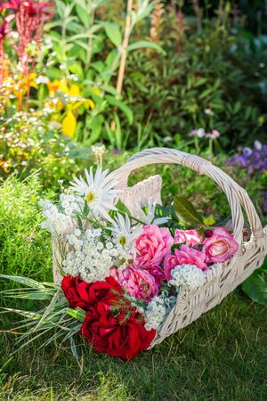 pruning scissors: Freshly cut colorful flowers in sunny garden Stock Photo