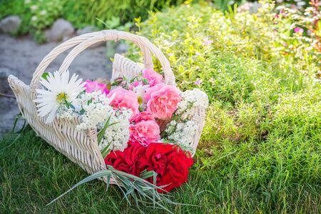 pruning scissors: Freshly cut flowers in basket in sunny garden