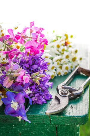 pruning scissors: Beautiful various types of flowers in summer garden