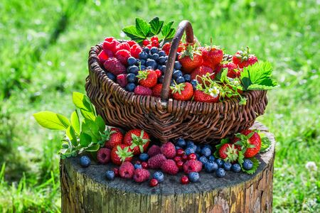 berry: Ripe berry fruits in basket