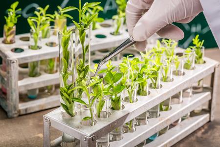 University lab exploring new methods of plant breeding