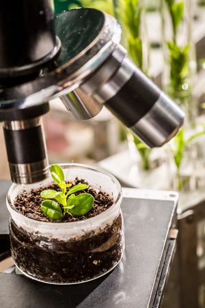 pesticides: Academic lab during test the pesticides