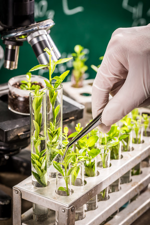 pesticides: University laboratory testing of pesticides on plants Stock Photo