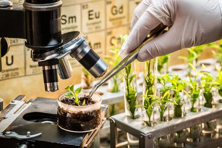 Chemisch laboratorium verkennen van nieuwe methoden van de plantenveredeling Stockfoto