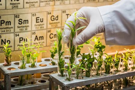 las pruebas de laboratorio farmacéutico de pesticidas en las plantas