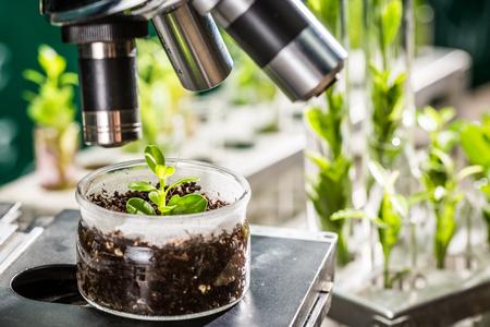 Academisch laboratorium verkennen van nieuwe methoden van de plantenveredeling Stockfoto - 55644347