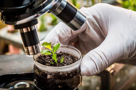 pesticides: Chemical laboratory testing of pesticides on plants