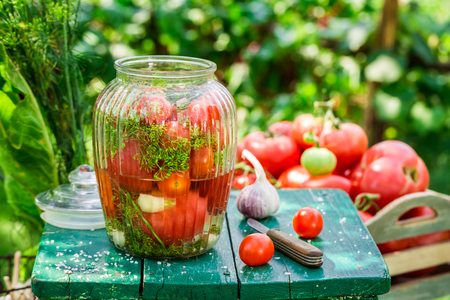 pickling: Pickling tomatoes with garlic and dill