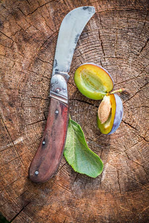 temperino: Little old penknife and fresh plums