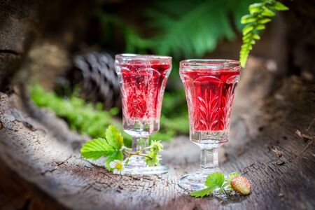 'wild strawberry: Homemade liqueur with alcohol and wild strawberry