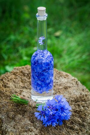 witchdoctor: Healthy tincture made of cornflowers