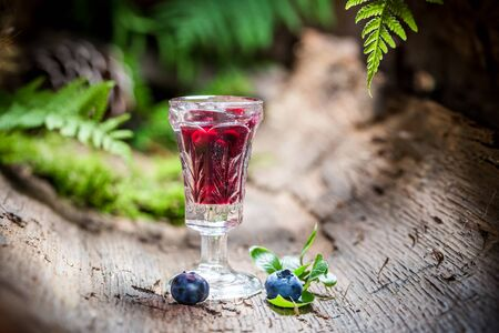 witchdoctor: Fresh liqueur with alcohol and blueberries Stock Photo