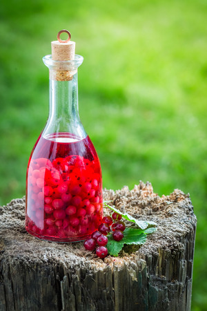 witchdoctor: Sweet liqueur made of alcohol and redcurrants