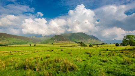 lake district: Green meadow in District Lake, England